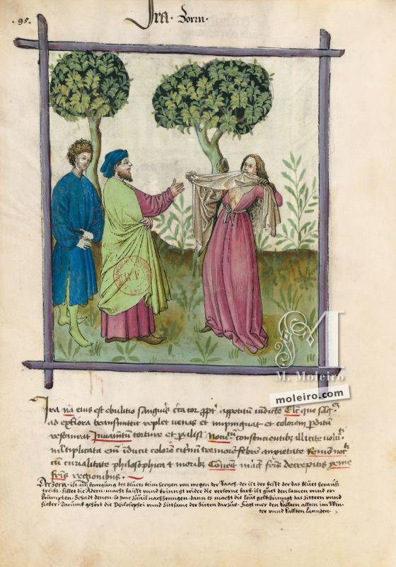 Tacuinum Sanitatis f. 95v, Colère
