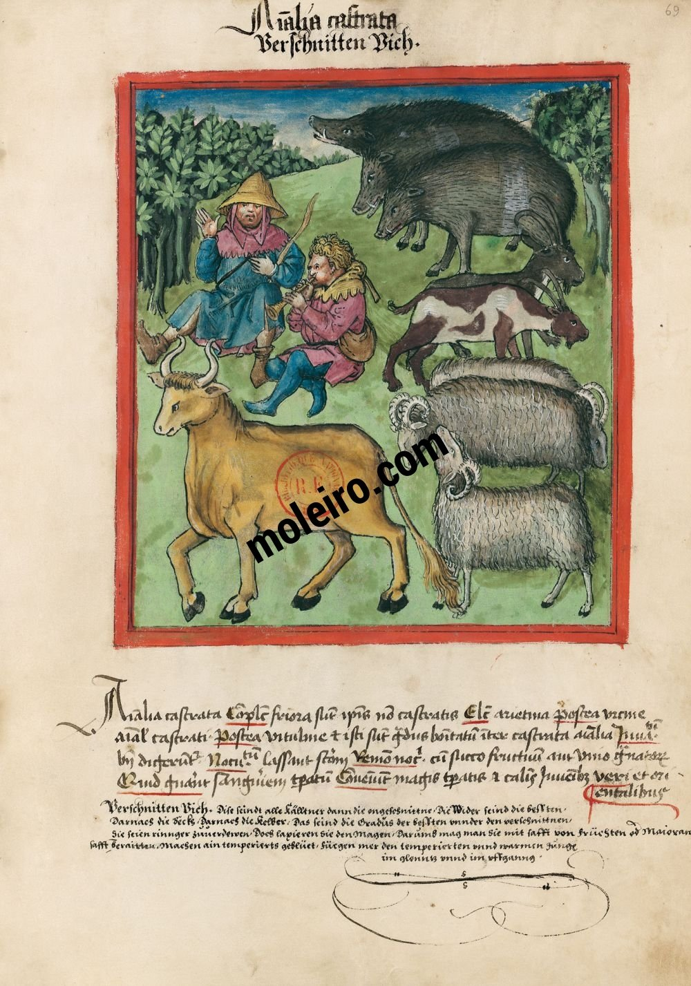 Tacuinum Sanitatis f. 69r, Castrated animals