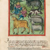<p>f. 69r, Castrated animals</p>