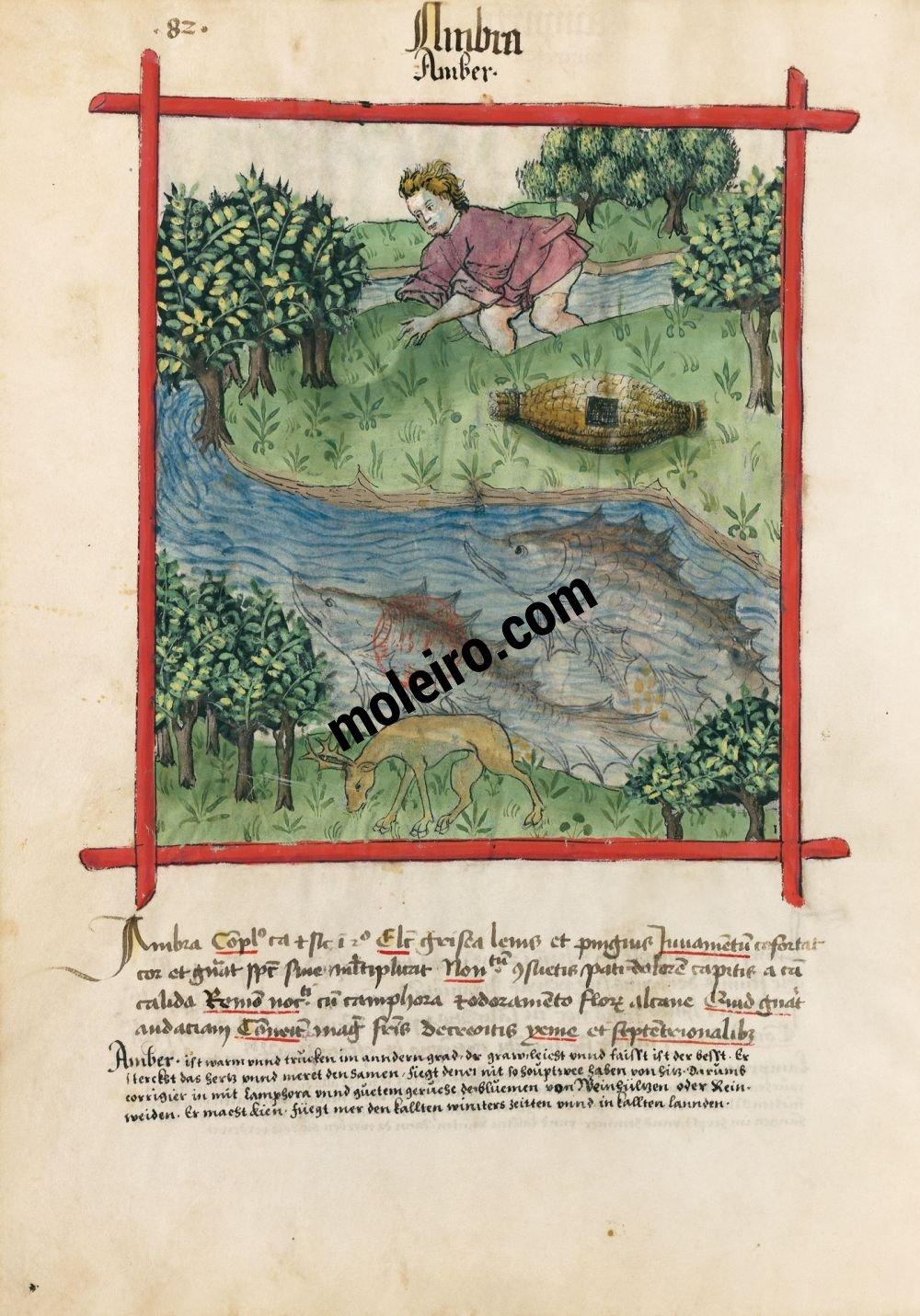 f. 82v, Ámbar en el Tacuinum Sanitatis - Ms. Lat 9333  (XV, Renania) Bibliothèque nationale de France, París tratado medicina edad media