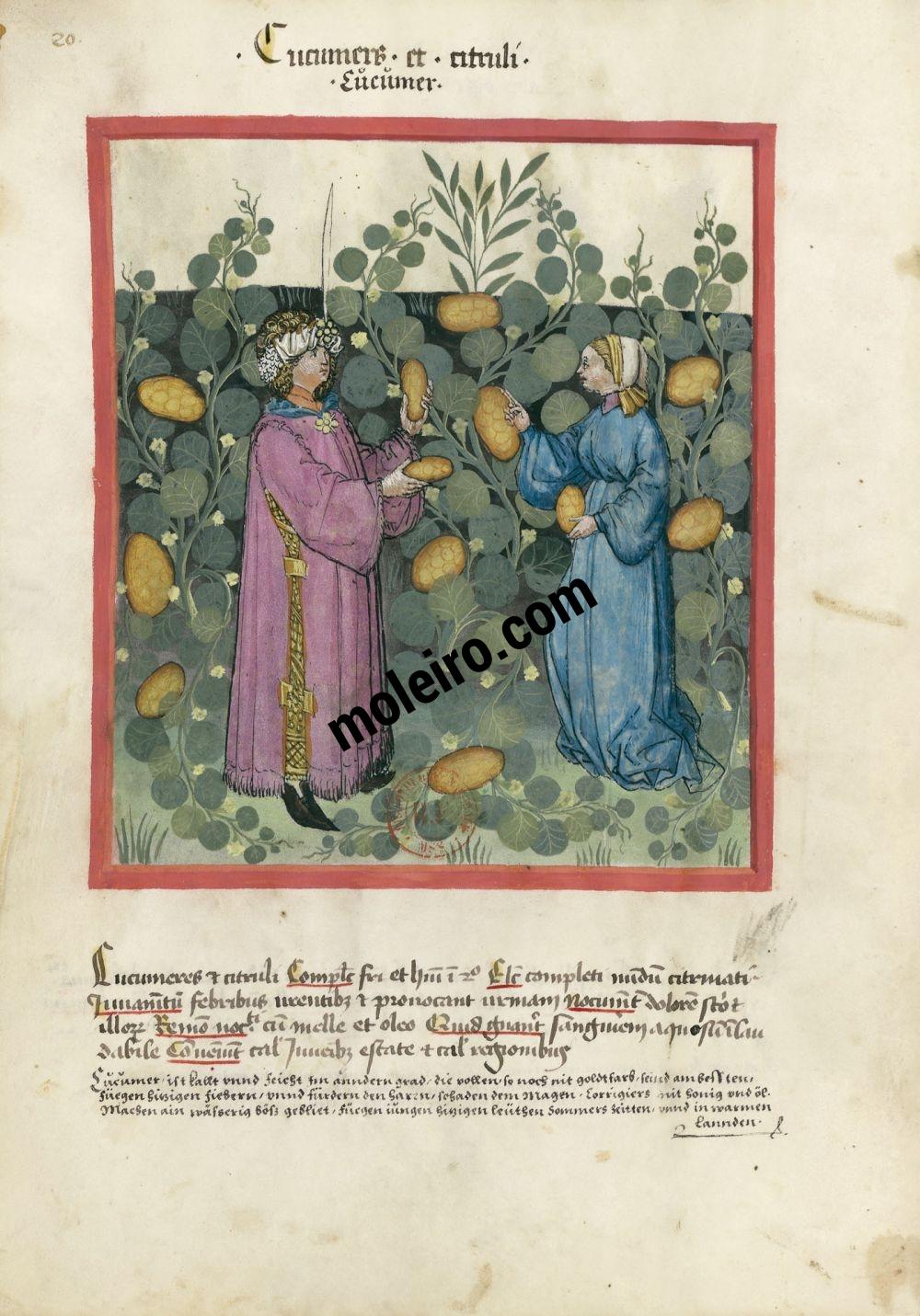 Tacuinum Sanitatis f. 20v, Gherkins and cucumbers