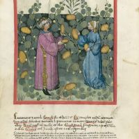 <p>f. 20v, Gherkins and cucumbers</p>