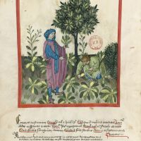 <p>f. 27v, Rocket and watercress</p>