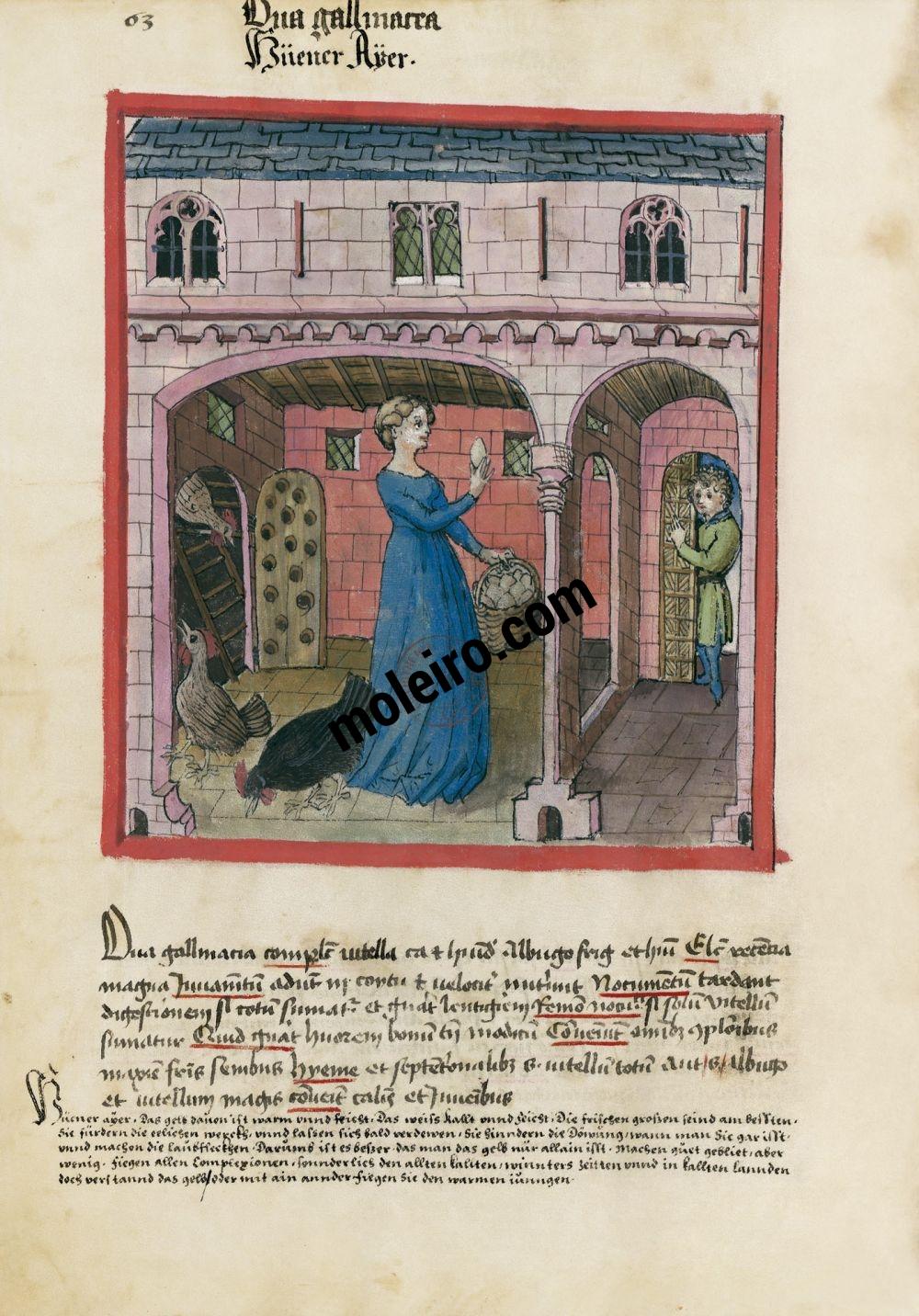 f. 63v, Huevos de gallina en el Tacuinum Sanitatis - Ms. Lat 9333  (XV, Renania) Bibliothèque nationale de France, París tratado medicina edad media