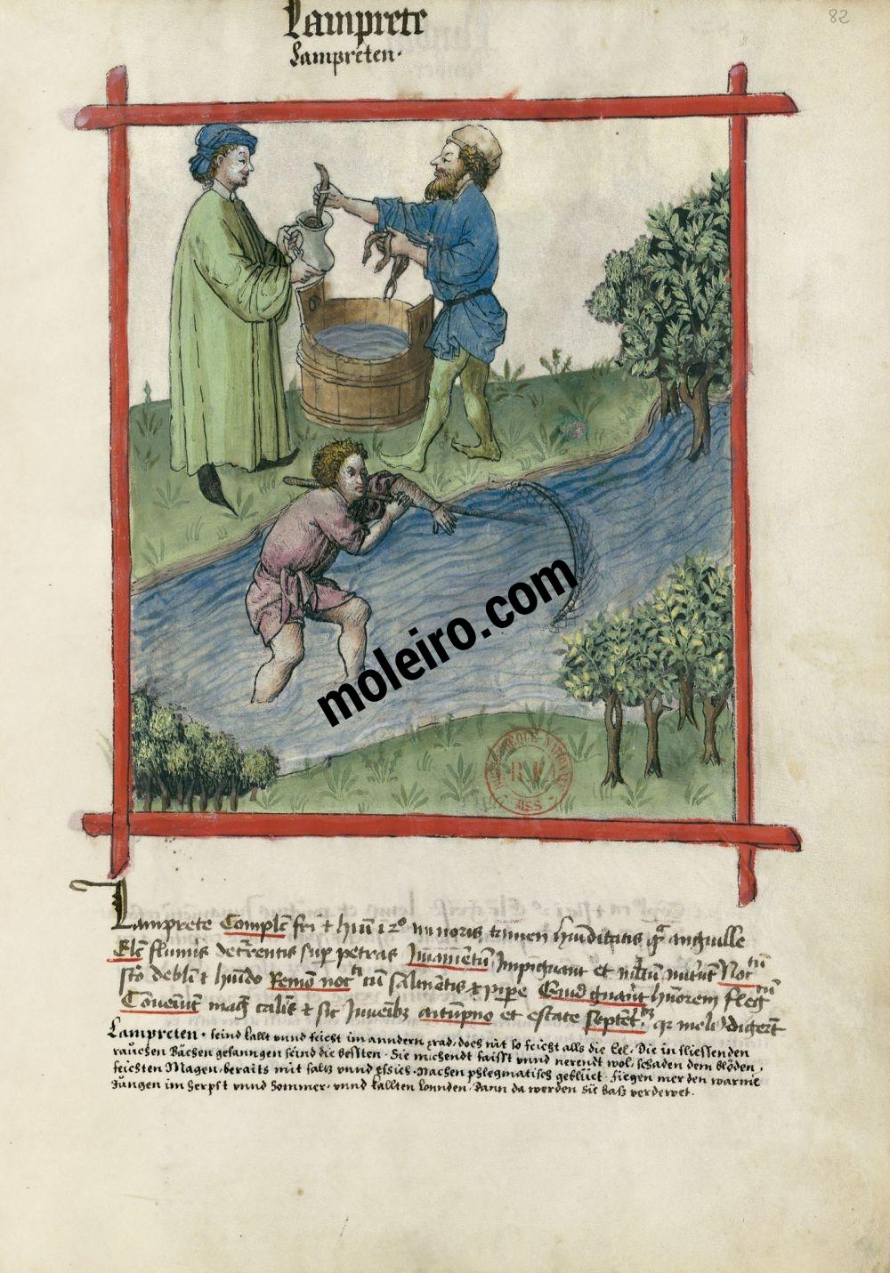 Tacuinum Sanitatis f. 82r, Lampreys