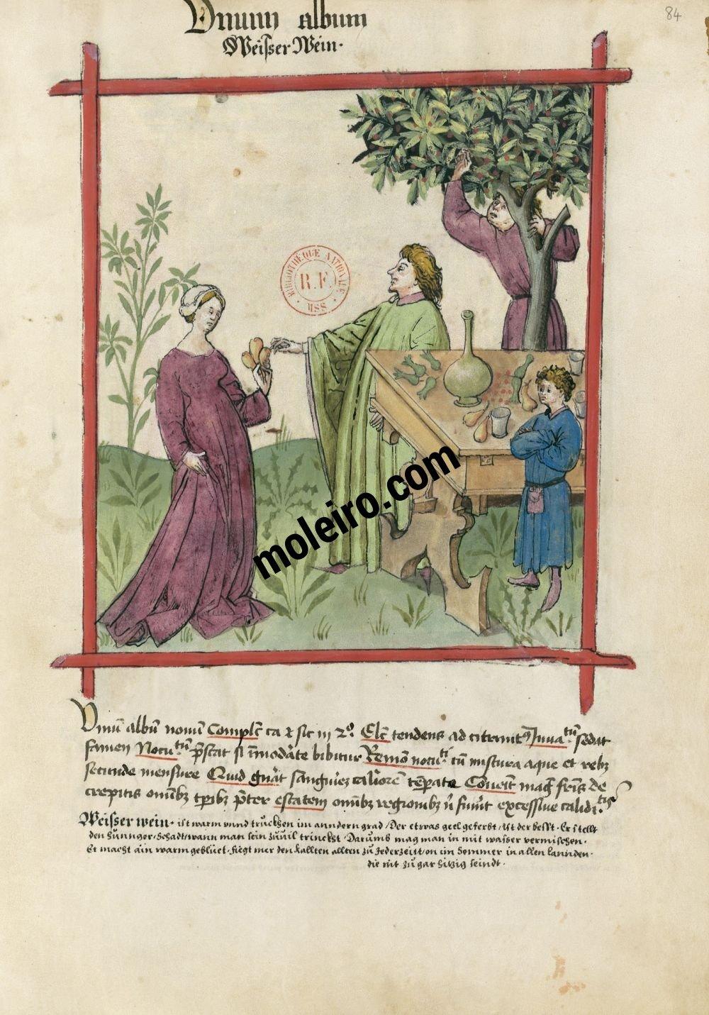 f. 84r, Vino blanco en el Tacuinum Sanitatis - Ms. Lat 9333  (XV, Renania) Bibliothèque nationale de France, París tratado medicina edad media