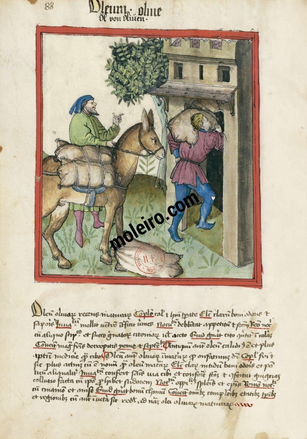 Tacuinum Sanitatis f. 88v, Olive oil