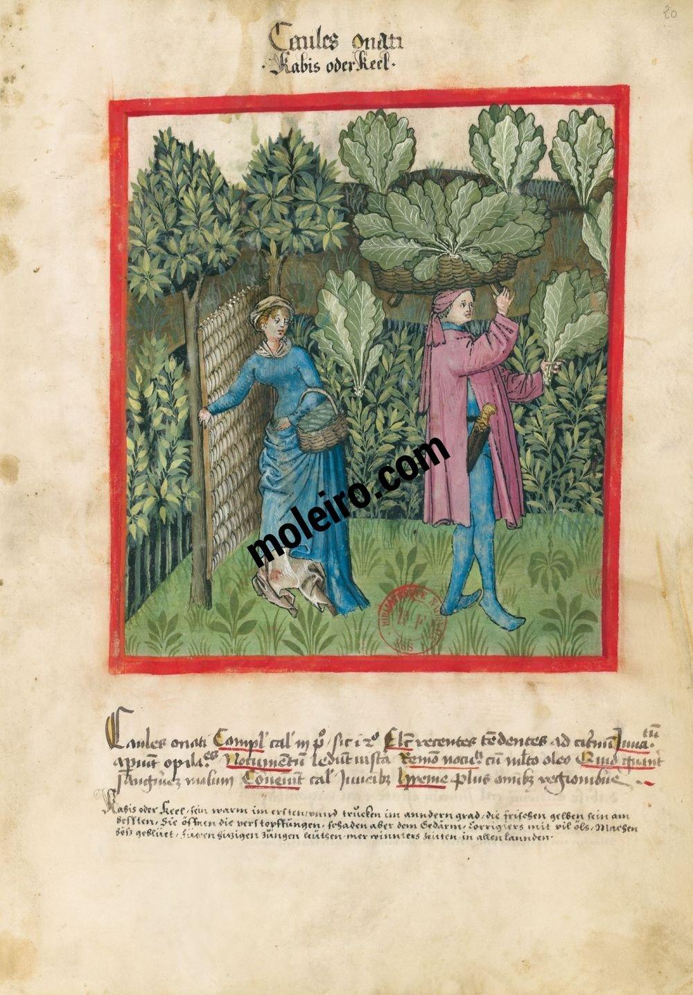 Coles Folio 20r en el Tacuinum Sanitatis - Ms. Lat 9333  (XV, Renania) Bibliothèque nationale de France, París tratado medicina edad media