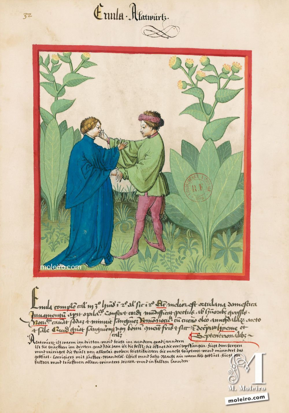 f. 32v, Enula campana. Tacuinum Sanitatis, Ms. Lat. 9333. Bibliothèque nationale de France, Parigi