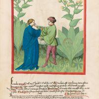 f. 32v, Elecampane