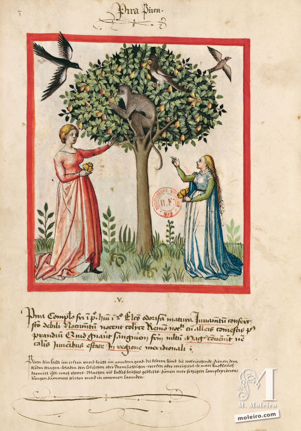 f. 3v, Pera. Tacuinum Sanitatis, Ms. Lat. 9333. Bibliothèque nationale de France, Parigi