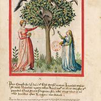 f. 3v, Pears