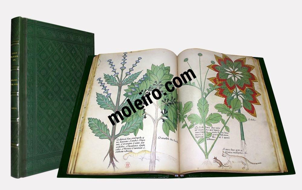 Tratado de plantas medicinales. Tractatus de Herbis -Sloane 4016