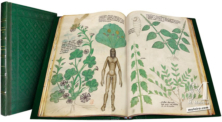 Tractatus de Herbis -  Sloane 4016 The British Library, Londres The British Library, Londres
