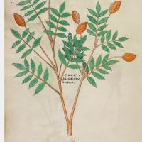f. 96v: Sumac and anagodam