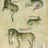 f. 50r:León; leopardo; liebre silvestre; elefante