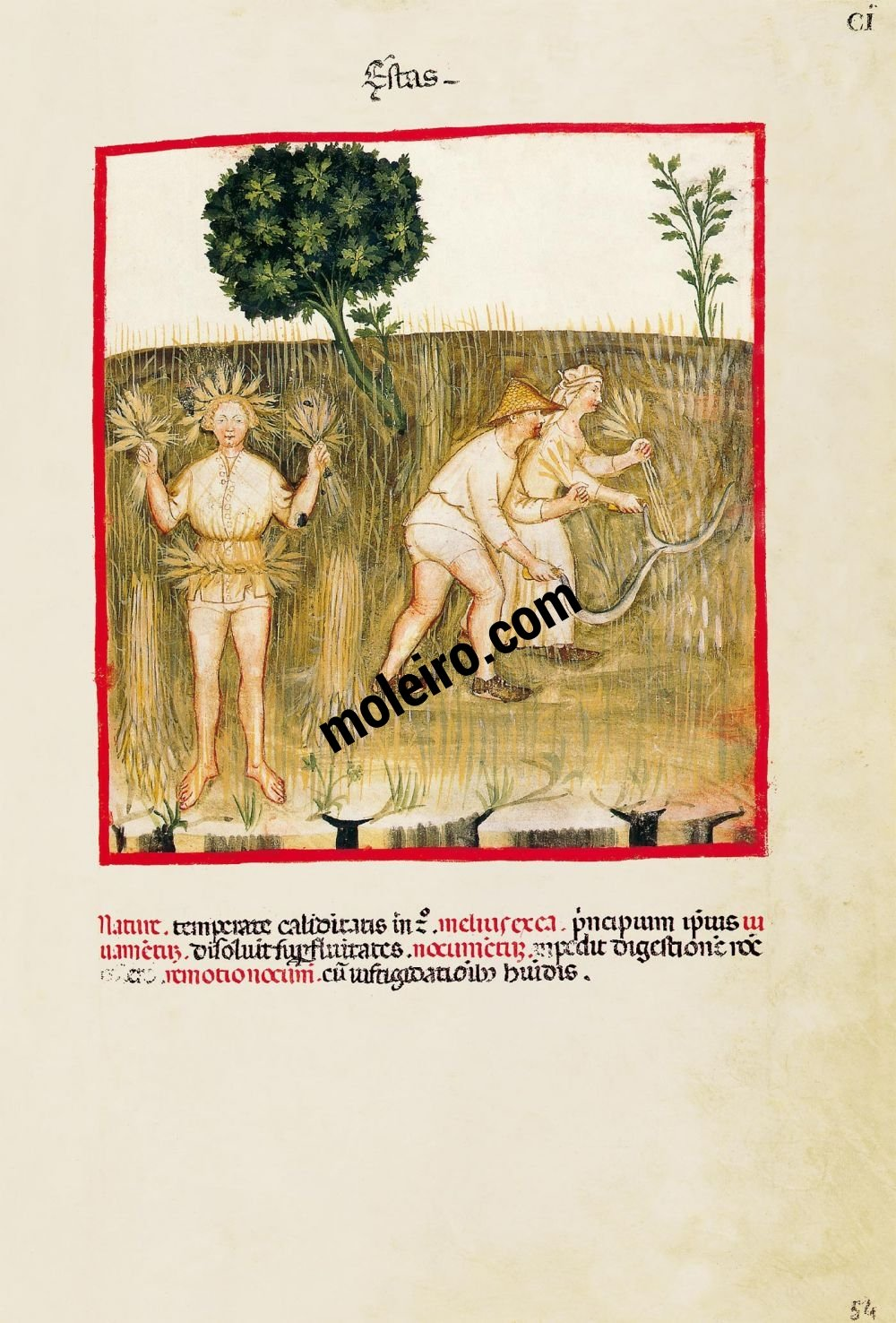 Theatrum Sanitatis f. CI, Summer