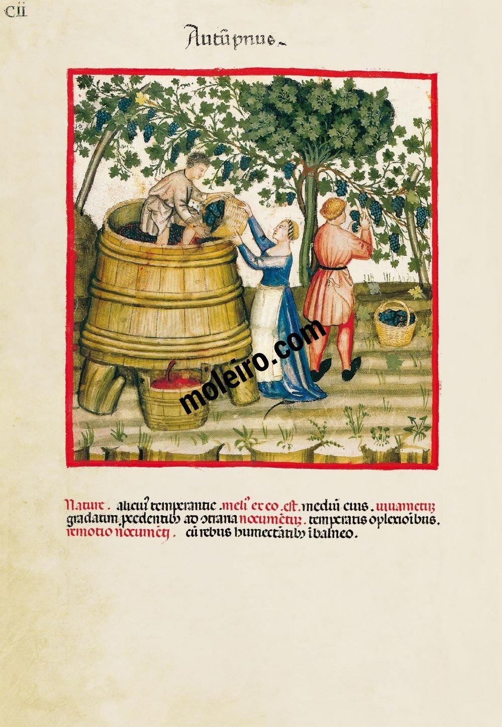 Theatrum Sanitatis f. CII, Autumn