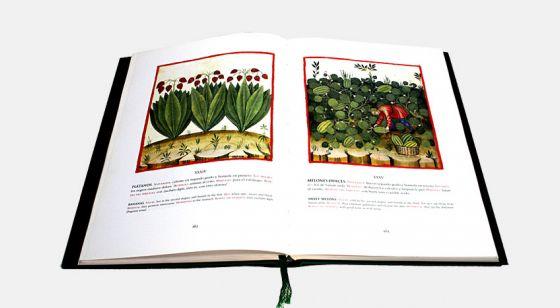 Theatrum Sanitatis Plátanos (f.XXXIV) y melones dulces (f. XXXV)
