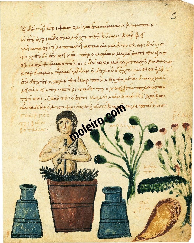 Theriaka and Alexipharmaka by Nicander folio 5r