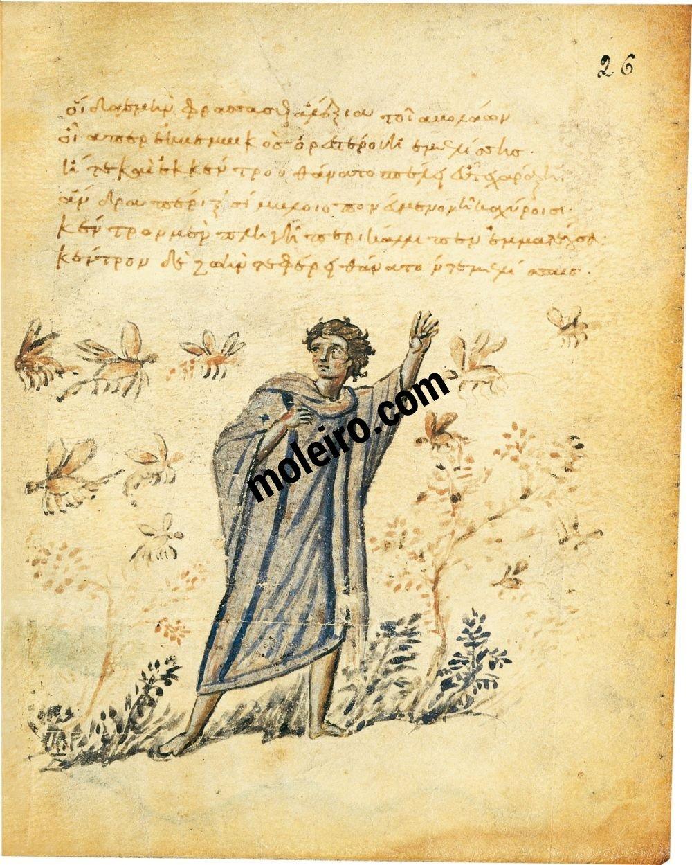 Theriaka e Alexipharmaka, di Nicandro folio 26r