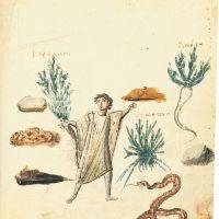 folio 44r