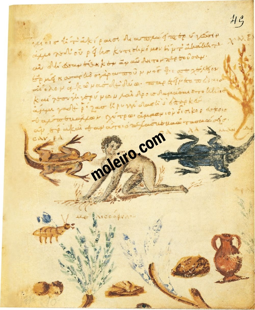 Theriaka and Alexipharmaka by Nicander folio 45r