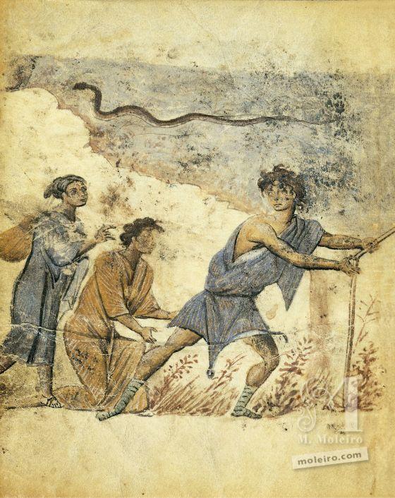 Theriaka and Alexipharmaka by Nicander folio 47v