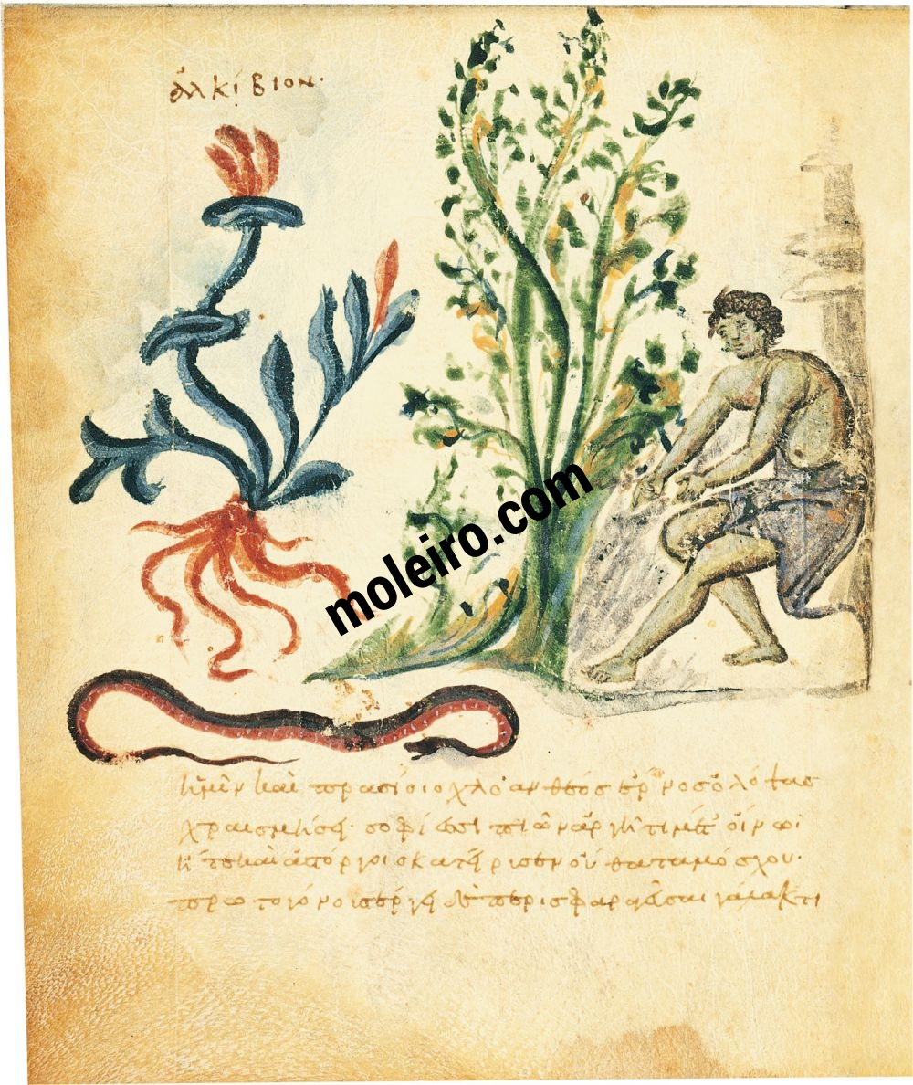 Theriaka and Alexipharmaka by Nicander folio 16v