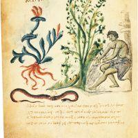 folio 16v