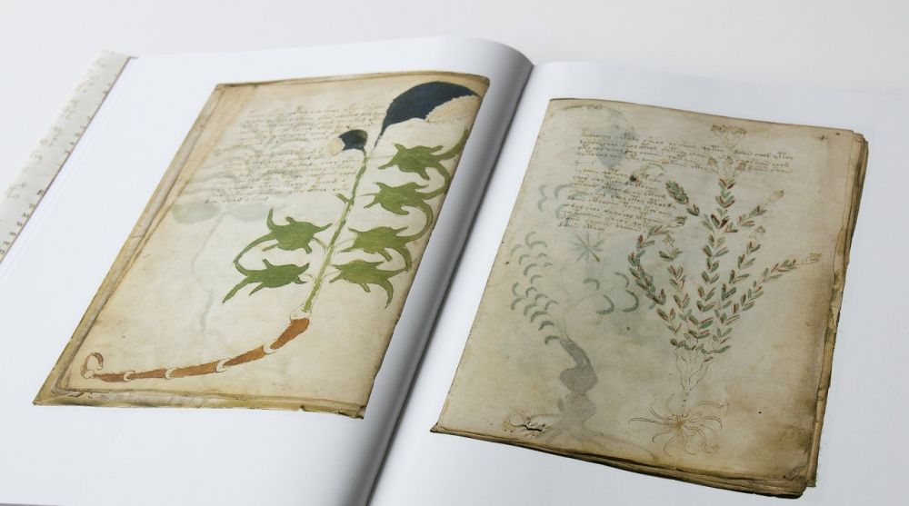 Das Voynich-Manuskript Pflanzenteil des Voynich-Manuskripts