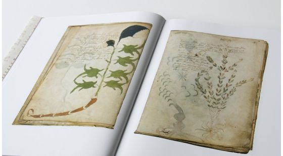 The Voynich Manuscript Plants section of The Voynich Manuscript
