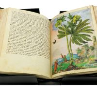 View of the display case of Mattioli´s Dioscorides illustrated by Cibo with the open book on it.